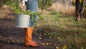 gospodarstwo rolne, a zachowek